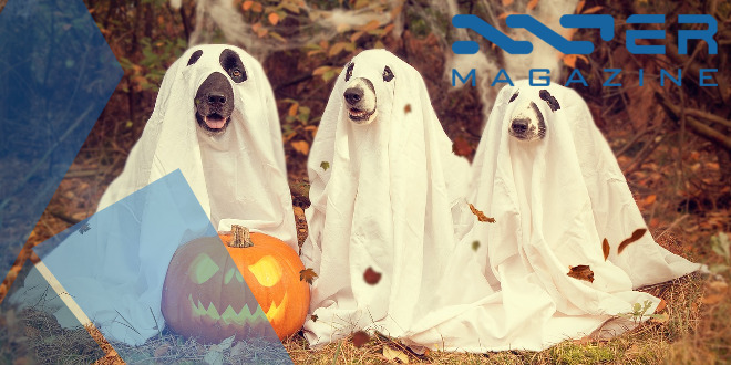 featured_image_halloween
