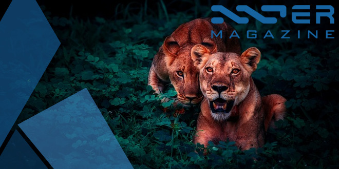 featured_image_lions