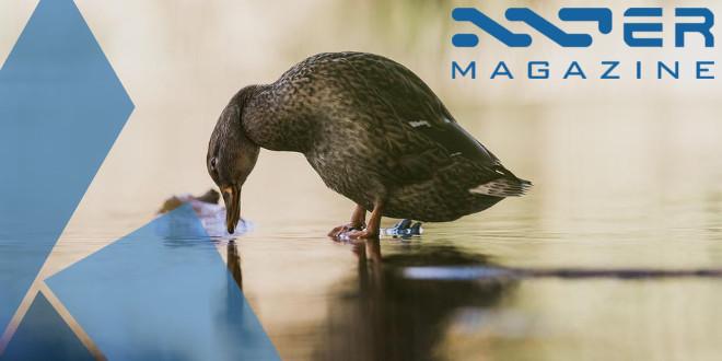 featured_duck_walking_on_water