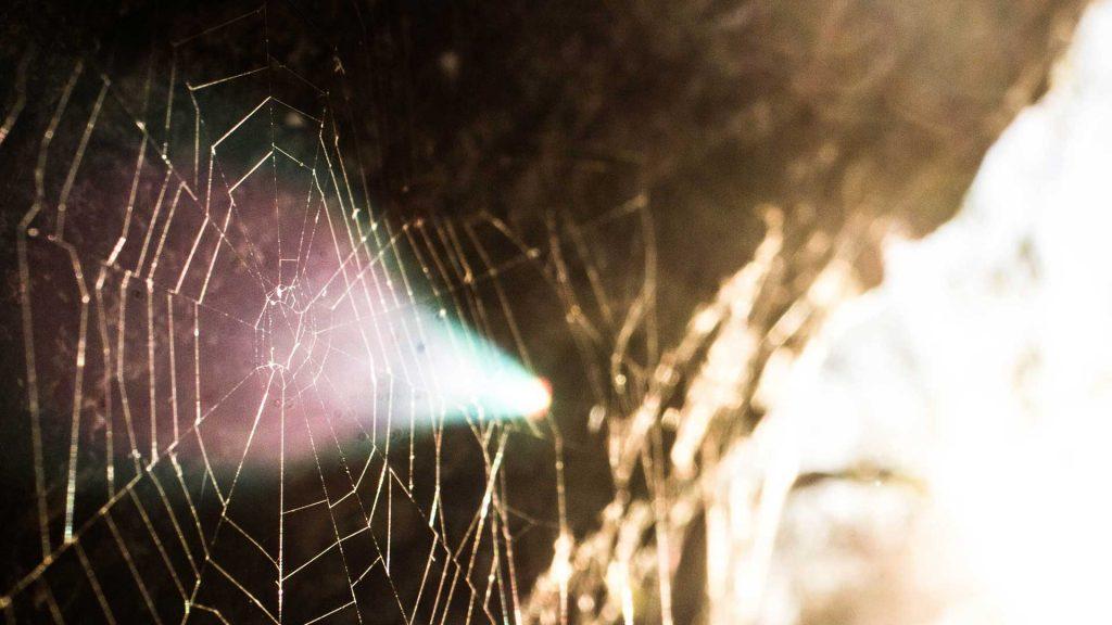 Nxterpuzzle_spiderweb_Ignis